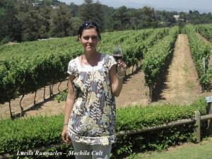Rotas dos vinhos na África do Sul