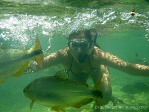 Que delícia ver os peixes tão de perto!!