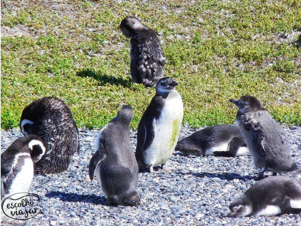 Ilha de Pinguins, Ushuaia.